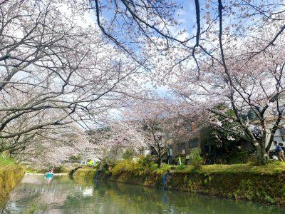 勝浦町「桜まつり」のPhotoSpher(球体写真)