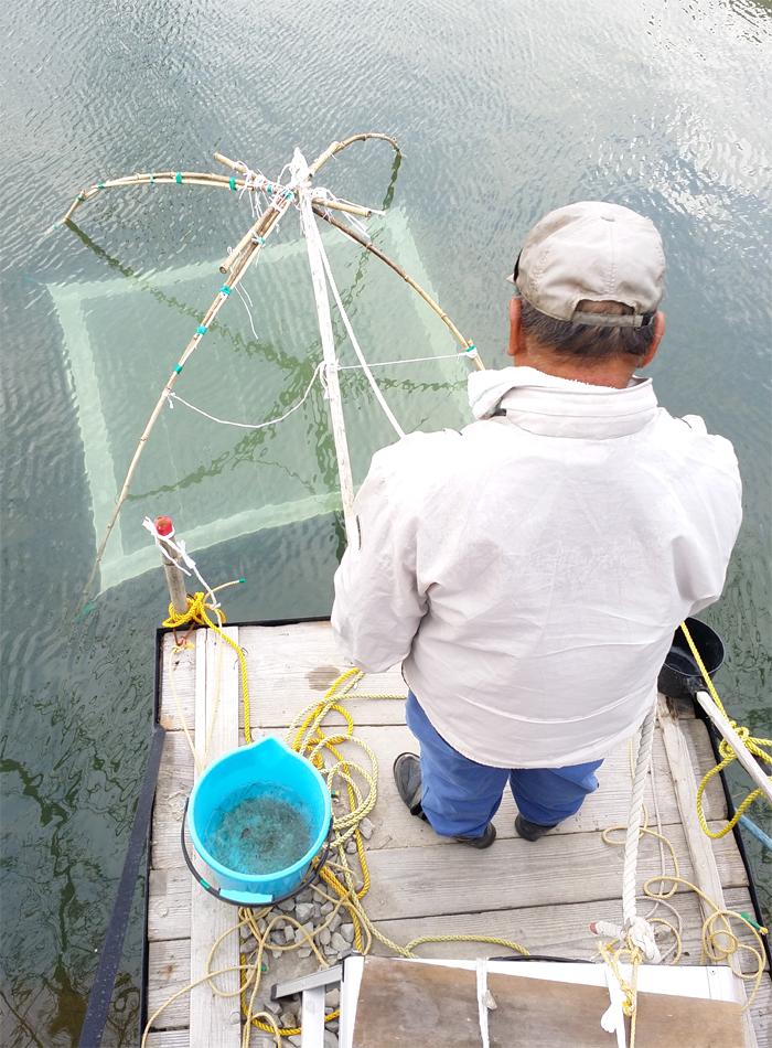 阿南市椿町「シロウオ漁」