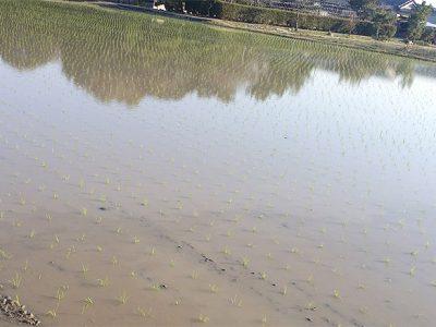 [地域]徳島県阿南市で田植えが始まりました