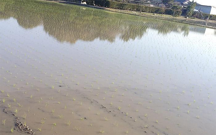20170403徳島県阿南市で田植えが始まりました