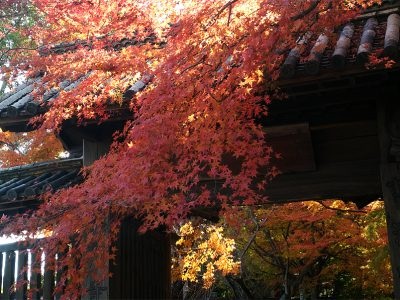 [徳島]丈六寺の紅葉