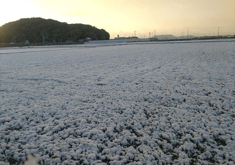 20180111徳島県南では珍しい雪化粧の朝