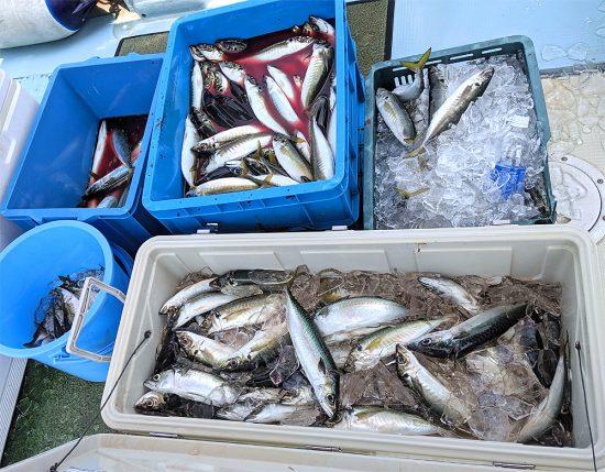 2019年7月28日(日)大野海苔の専務さんと釣りに行きました:今日の釣果300匹オーバー!