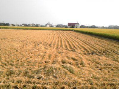 阿南市の田んぼは、稲刈がほぼ終わりました。